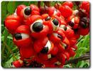 Amazon Superfood pre povzbudenie, detoxikáciu a posilnenie organizmu