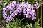 Potešte svoje oči na jednej z najväčších predajných výstav orchideí v Európe…