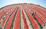 Zdravá pochúťka: Sušené paradajky bez chémie