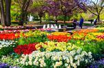 Amsterdam, výstava kvetov Keukenhof a Brusel