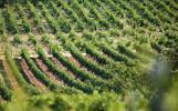 VIP vínny pas na 6. ročník Dni vína MOVINO