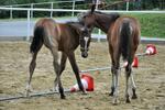 Jazdy na koni v prírode či jazdecký kurz
