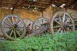 Prehliadka farmy vo Východnej aj s ochutnávkou syrov