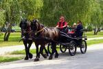 Jazda konským záprahom po Pezinku či Panholci