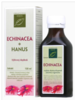 Echinacea pre obranyschopnosť organizmu