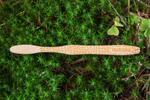 Bambusové kefky pre deti aj dospelých s vlastným textom
