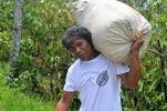 6-dielny Degustačný balíček zrnkových káv Nômad