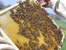 Kreatívna sada na výrobu čajových sviečok z včelieho vosku